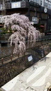 Photo_17-04-13-16-13-33.589