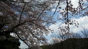 Photo_17-04-13-16-13-45.090