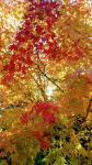 Photo_17-10-31-17-15-16.543