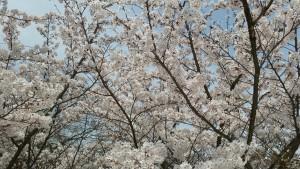 Photo_18-04-02-14-39-40.673