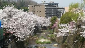 Photo_18-04-02-14-39-51.476